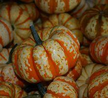 Pumpkin by jessiebea