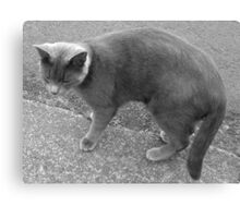 At Night All Cats Are Grey Canvas Print