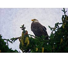 Bald Eagle - Proud and Free Photographic Print