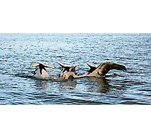 Pelicans Brew Photographic Print