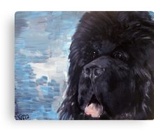 Portrait of a Newfoundland Dog Canvas Print