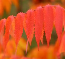 Blazing Sumac by Gina Ruttle  (Whalegeek)