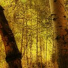 Aspen Glow by Barbara  Brown