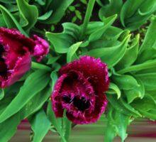 Maroon Tulips Sticker