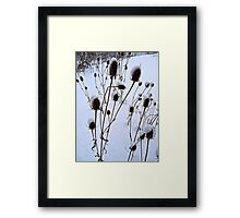 winter burdock Framed Print