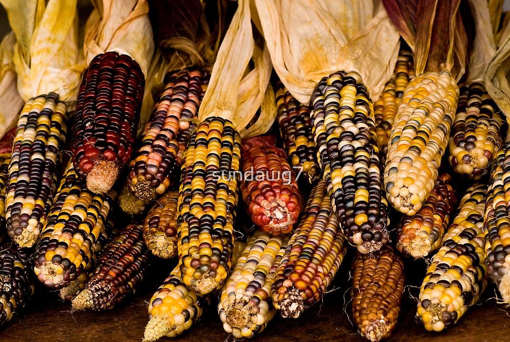 Corn A Plenty by sundawg7