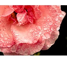 Rose droplets Photographic Print