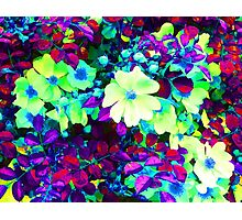 Neon Flowers Photographic Print