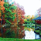autumn reflection by ANNABEL   S. ALENTON