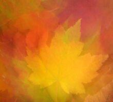 Blurred Vision by Gina Ruttle  (Whalegeek)