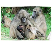 FAMILY TIME - THE CHACHMA BABOON - Papio ursinus Poster