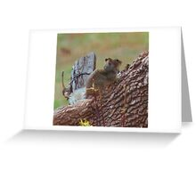 Spotted Ground Squirrel Greeting Card