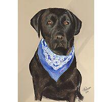 Max the Labrador  Photographic Print