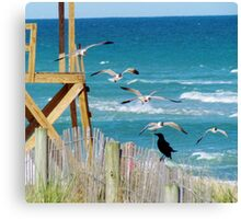 Black Bird And Seagulls Canvas Print