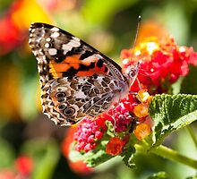 How soft indeed the song of the butterflies eating. by Ruby  Pen