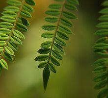 dreamy green by byzantinehalo