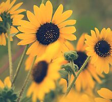 Sunflowers In Retro by John  De Bord Photography