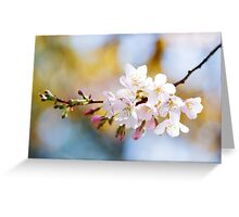 I go to nature to be soothed and healed, and to have my senses put in order... Greeting Card