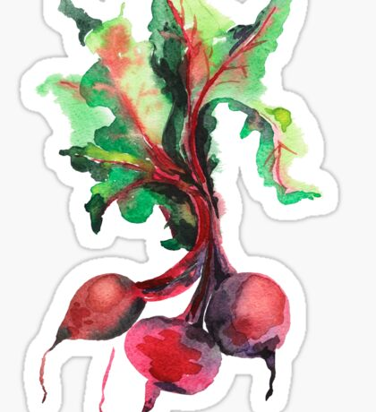 Watercolor image of beet root on white background.  Sticker