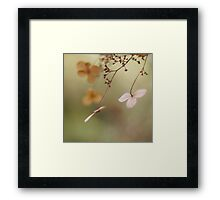 Butterflies Framed Print