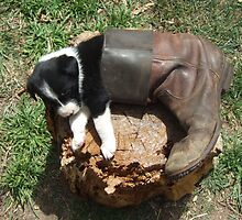 Pup and boot 2 by BackTrack