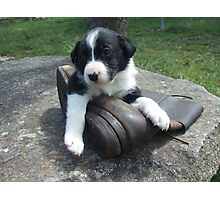 Pup and boot 3 Photographic Print