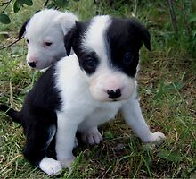 Two pups by BackTrack