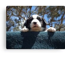 Puppy jumps Canvas Print