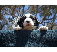 Puppy jumps Photographic Print