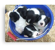 Pups in bucket Canvas Print