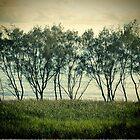 trees near the surf break lennox head by GrowingWild