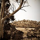Old Country ~ Orielton, Tasmania by Jaz Costello