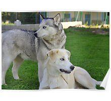 Husky & Daughter Poster