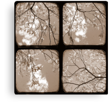 Look Through My Window - TTV Canvas Print
