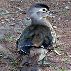 Baby Duck by Cynthia48