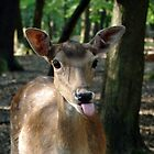 Roe Deer Puts His Tongue Out by Nikolaj Masnikov