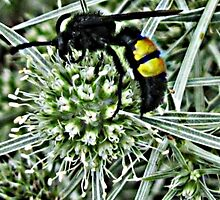 Wasp on a Thistle by WienArtist