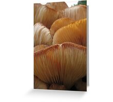 Funghi Greeting Card
