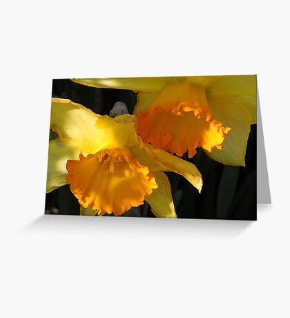 Daffodils...... Greeting Card