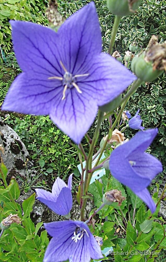 Purple Passion by WienArtist