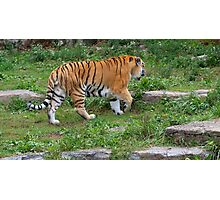 You Know You Love Tigers When.... Photographic Print