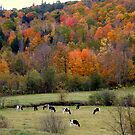Fall in East Washington, NH by Len Bomba