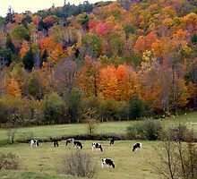 Fall in East Washington, NH by Len Bomba