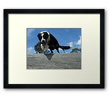 Zorro jumps log Framed Print