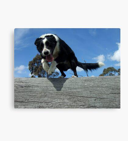 Zorro jumps log Canvas Print