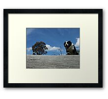 Zorro jumps log WS Framed Print