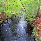 Creek In The Country by Cynthia48