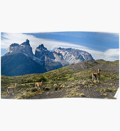 Where Guanaco roam free, Torres del Paine National Park Poster