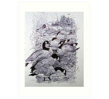 Canada Geese. Art Print