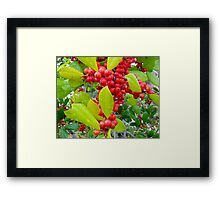 Red Holly Berries Framed Print